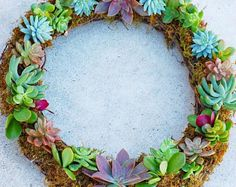 Full Round Succulent Wreath