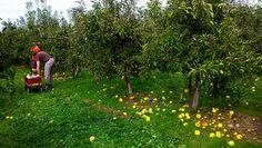 Lynd's Fruit Farm. Fall favorite place.