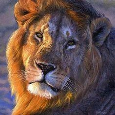 Beauty of the Lion.