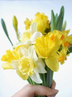 A Wild Daffodil Bouquet