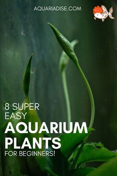 8 easy #aquarium plants (that anyone can grow!)