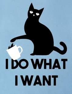 Crazy Cat Lady, Crazy Cats, I Love Cats, Cool Cats, All Black Cat, Kitsch, Cat Posters, Sleepy Cat, Here Kitty Kitty