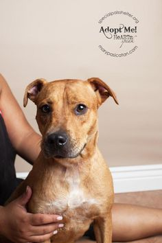 "2/20/15 SL Sadieis a female terrier mix who was rescued with her 5 pups who all found homes. Now it""s Sadie's turn. She is currently residing at Special Pals Animal Shelter."