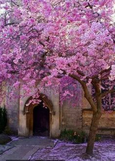 I want this tree in my yard. Also, I want an apple tree and some fruit trees/plants :) Everything looks so pretty during Spring Belle Image Nature, Beautiful Flowers, Beautiful Places, Beautiful Beautiful, Blossom Trees, Cherry Blossoms, Apple Tree Blossoms, Flowering Trees, Blooming Trees