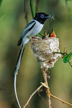 What a wonderful mother bird