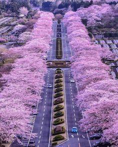 Sakura in Japan Beautiful Roads, Beautiful Landscapes, Beautiful Places, Places To Travel, Places To Go, Japanese Landscape, Shizuoka, Japan Travel, Japan Tourism