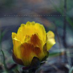Pölcz Klaudia - kisklau: Tavaszodik az erdőben