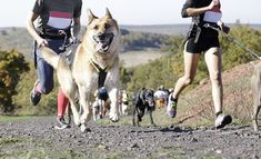 If you have an active, athletic dog on your hands, there are plenty of canine sports to consider. Here are the 11 best and popular dog sports to try. Lake Run, 15 Dogs, Cross Country Running, Dog Activities, Dog Runs, Animal Rescue Shelters, Dog Walking, Large Dogs, Sport