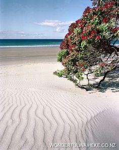 Onetangi Beach, Waiheke Island, New Zealand Beautiful Places To Visit, Places To See, Beautiful Beaches, Amazing Places, Tasmania, New Zealand Houses, New Zealand Landscape, Waiheke Island, The Beautiful Country