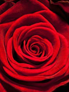 2012 - De roos is op deze prachtige kaart ingezoomd, waardoor de kern en de rozenblaadjes mooi te zien zijn.