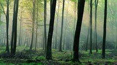 Nature Denmark