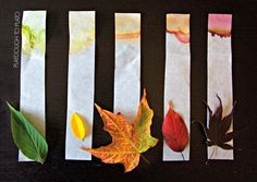 What-an-awesome-kids-science-experiment-for-fall-See-how-the-leaves-make-their-colors-with-leaf-chromatography..jpg (3075×2188)