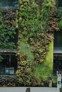 ♂ Vertical garden Green living wall - Paris Plants are awesome. Green Architecture, Landscape Architecture, Landscape Design, Sustainable Architecture, Green Facade, Green Roofs, Garden Care, Plant Wall, Dream Garden