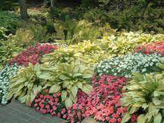 hosta garden 3 | Flickr - Photo Sharing!