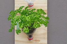 Hortinha caseira usando garrafas PET – reciclagem e criatividade