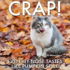 20 Cute and Funny Animal Fall Pictures You'll Love More than PSL #fallmemes #cutememe #cuteanimals #funnyanimals #animalmemes Cute Funny Animals, Funny Animal Pictures, Funny Dogs, Funny Memes, Fall Pictures, Pictures Images, Fall Memes, Text For Him, Cat Scratching