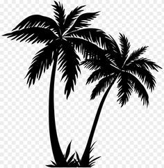 alm tree clipart & palm tree line art PNG image with transparent background png & Free PNG Images - aesthetic png aesthetic transparent png background full hd png frames/ borders/clipart png kvety png picsart pngs