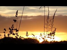 Peaceful sunsets - Music by Estas Tonne & Birds Estas Tonne, Earth, Peace, Sunset, Photo And Video, Concert, Music, Youtube, Musica
