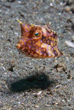 box fish by Patrick Hess on 500px