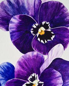 Pansy watercolor illustration by Studio Sonate Watercolor Illustration, Pansies, Studio, Plants, Instagram, Design, Studios, Plant