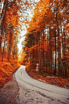 autumnlly:   fall blog