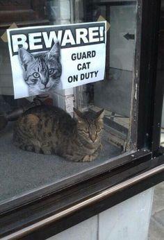 Katze im Dienst!