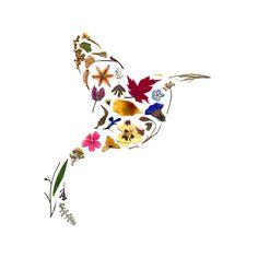 Pressed Flowers - Hummingbird