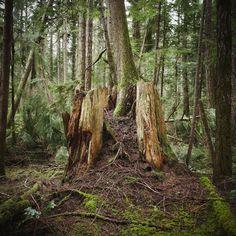 Vestiges of ancient forests- nat geo