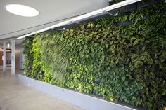 The leaves may be turning outside, but these Woolly Pocket living walls are evergreen.