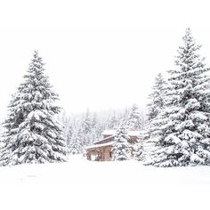 Winter Landscape, Snow Photograph, Log Cabin Decor, Wyoming Art,... ($25) ❤ liked on Polyvore featuring home, home decor, wall art, winter, rustic home decor, winter trees, landscaping pine trees, photo tree and mountain wall art