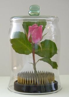 two glass pieces glued to the bottom of a vase creates a cloche