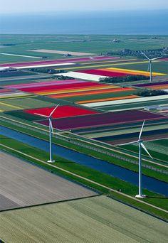 Het is een bijzonder spel van kleuren en lijnen, als je vanuit de lucht naar de Hollandse bollenvelden kijkt.