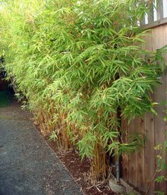 A living screen of bamboo provides additional privacy between neighbors. Landscape design measures like using native plants, avoiding inv...