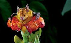 BioOrbis: O Chamado das Flores