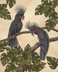Black Palm Cockatoos poster print by Dianne Krumel