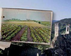 Le prugne secche dell'Aquitania  #prugne #prunes #dried #fruit #food #wellness #fruttaebacche
