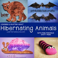 { Hibernating Animals }