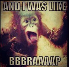 and I was like funny memes animals meme lol monkey cute. humor funny animals - Monkeys Funny - and I was like funny memes animals meme lol monkey cute. Baby Animals, Funny Animals, Cute Animals, Funny Monkey Pictures, Funny Pics, Baby Orangutan, Chimpanzee, Cute Monkey, Monkey Monkey