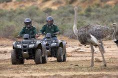 Aquila Game Reserve | Quad biking safari
