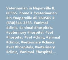 Veterinarian in Naperville IL 60565- home # #veterinarian #in #naperville #il #60565 #(630)544-3333, #animal #clinic, #animal #hospitals, #veterinary #hospital, #vet #hospital, #vet #clinic, #animal #clinics, #veterinary #clinics, #vet #hospitals, #veterinary #clinic, #animal #hospital, #ask #a #vet, #dog #clinic, #vet #naperville, #pet #clinics, #pet #hospital, #naperville #vet, #pet #hospitals, #vets #in #naperville, #naperville #veterinarians, #naperville #veterinarian, #naperville, #vet…