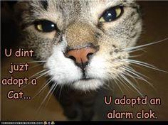 OMG!!!! This is soooo true! My kitten wakes me up EVERY MORNING!!!!! Haha