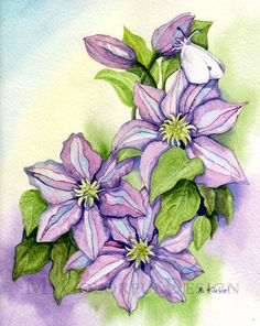 Clematis Original Watercolor Painting by MyColorfulDesign on Etsy