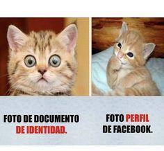 Best funny love you Ideas Funny Spanish Memes, Funny Relatable Memes, Funny Animal Memes, Cute Funny Animals, Funny Images, Funny Pictures, Comebacks Memes, New Memes, Memes Humor