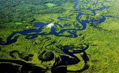Vista aérea da Floresta Amazônica (AM)