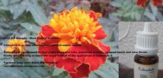 https://rabiabibiclinic.wordpress.com/2015/01/30/calendula-first-aid-remedy