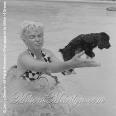Informal shots of Marilyn Monroe in the pool in Taken by her friend/business partner Milton Greene at his Connecticut home. Her expression in the last image.