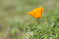 Digitalphotoholic Antelope Valley 사진을 좋아하는 사람들, 미주 최대 사진 클럽, Love photography
