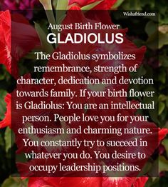 August Birth Flower : Gladiolus Symbolic Meaning:  The Gladiolus symbolizes a strong character and focus. It also signifies remembrance, dedication and devotion towards family. Back in the Victorian era, the flower would signify 'love at first sight'.   Personality Traits:  The people with Gladiolus as birth flower are believed to be charming and enthusiastic in nature. They are very intellectual people and fight hard for success. August born people often desire to be leaders in their…
