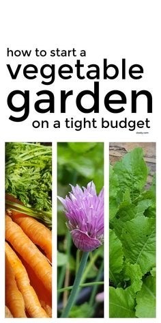 These tips for growing vegetables for beginners on a budget will help you with starting a garden cheaply in pots and containers even if your gardening in a small space in your backyard. These vegetable growing tips show you don't need fancy raised beds to get started and will help you pick the best seeds for fast growing veggies. #growingvegetables #vegetablegrowing #growyourownvegetables #vegetablegarden #startavegetablegarden #growingvegetablesforbeginners Healthy Family Meals, Nutritious Meals, Starting A Vegetable Garden, Growing Veggies, Food Waste, Frugal Meals, Grow Your Own, Fast Growing, Budgeting