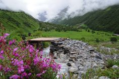 Valley of Flowers National Park, India